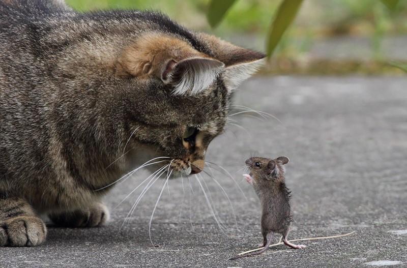 Кот с мышкой.
